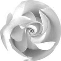 rose200
